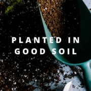 planted in good soil